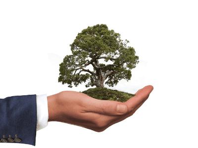 mains avec un arbre